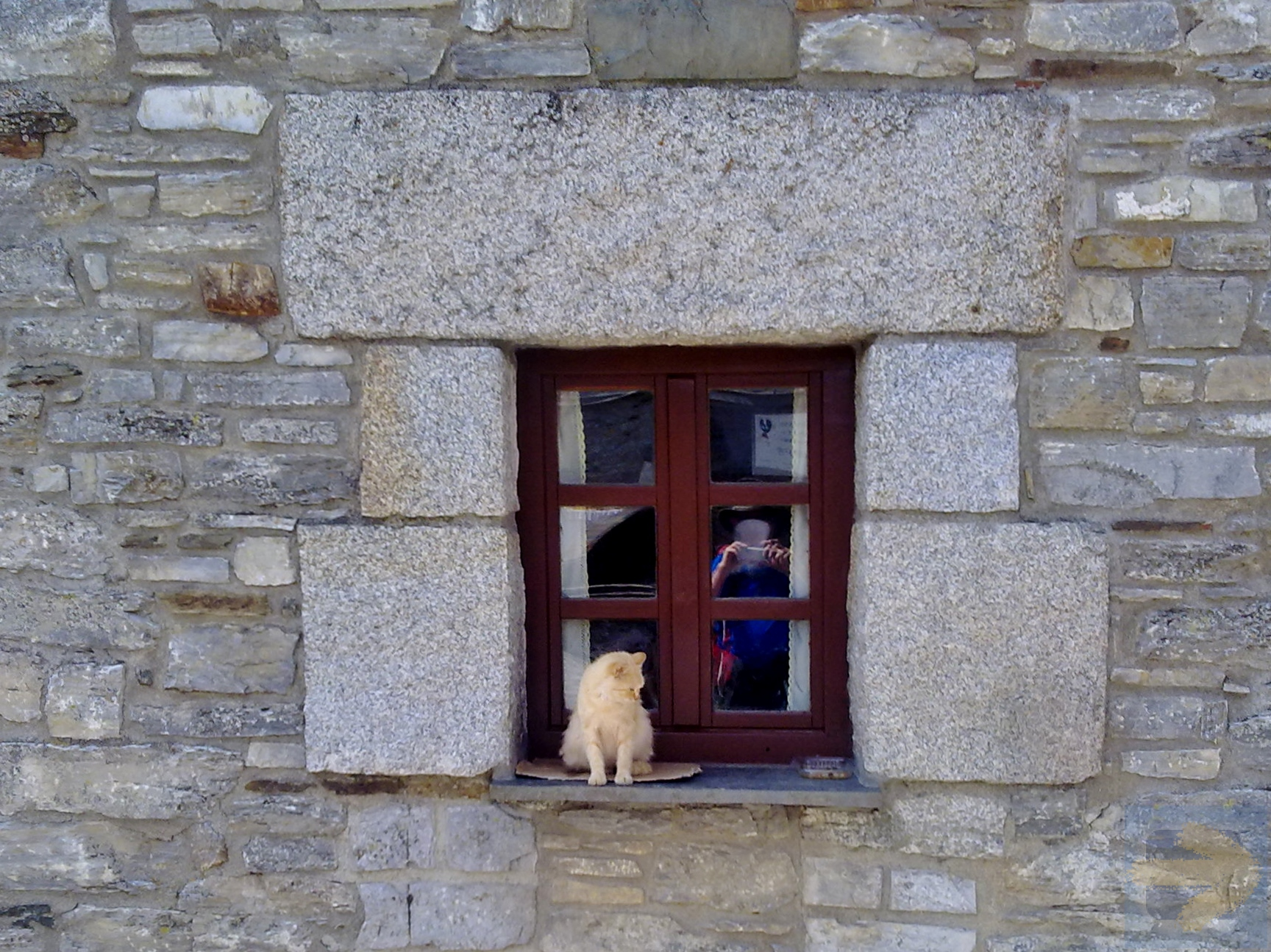 A Cat, a Pilgrim,  a Window and a Toy.