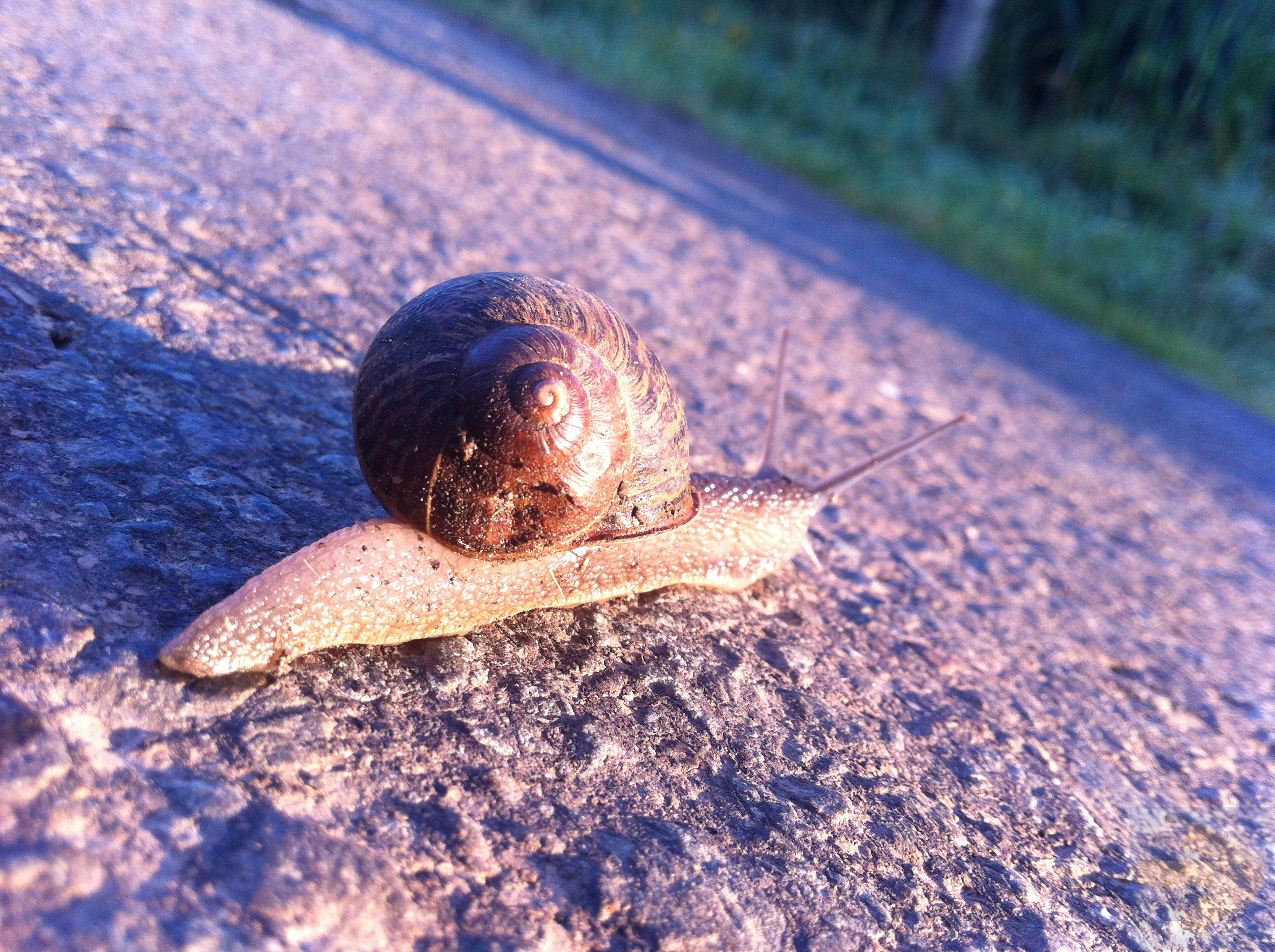 A snail like us...