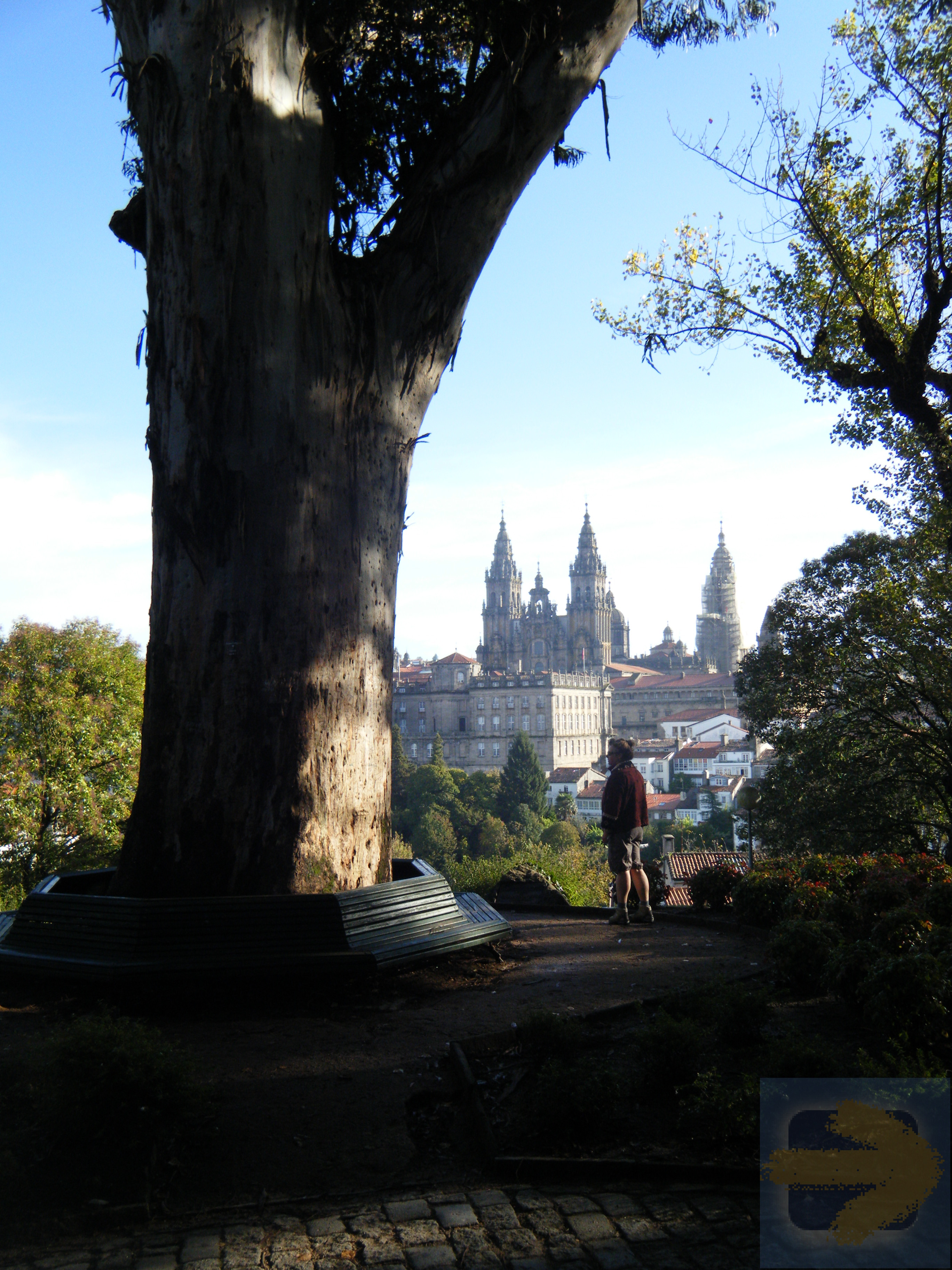 Big Tree with the Cathedral of Santiago