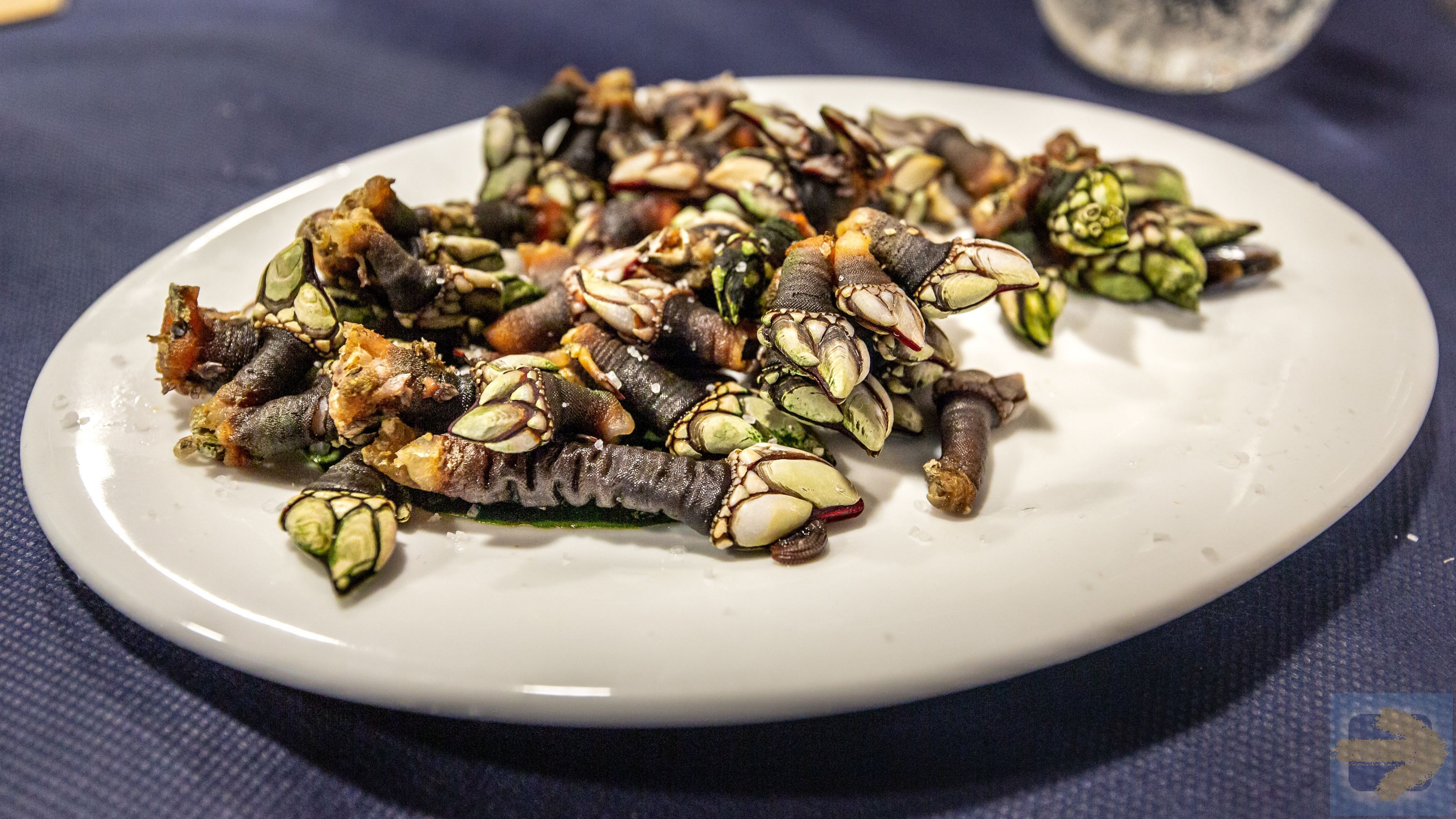 Percebes is what you really want!!!
