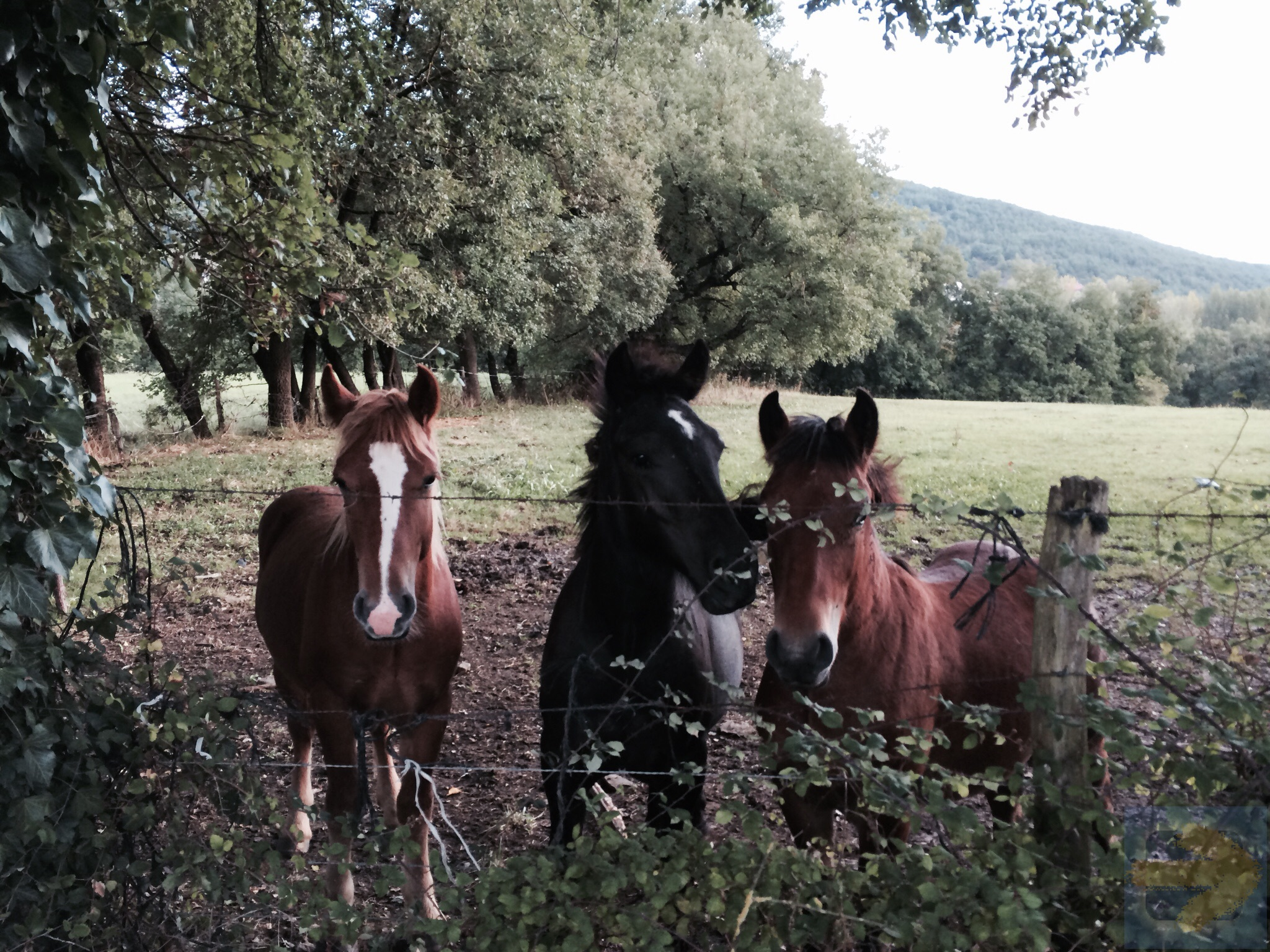Ponies on the Camino