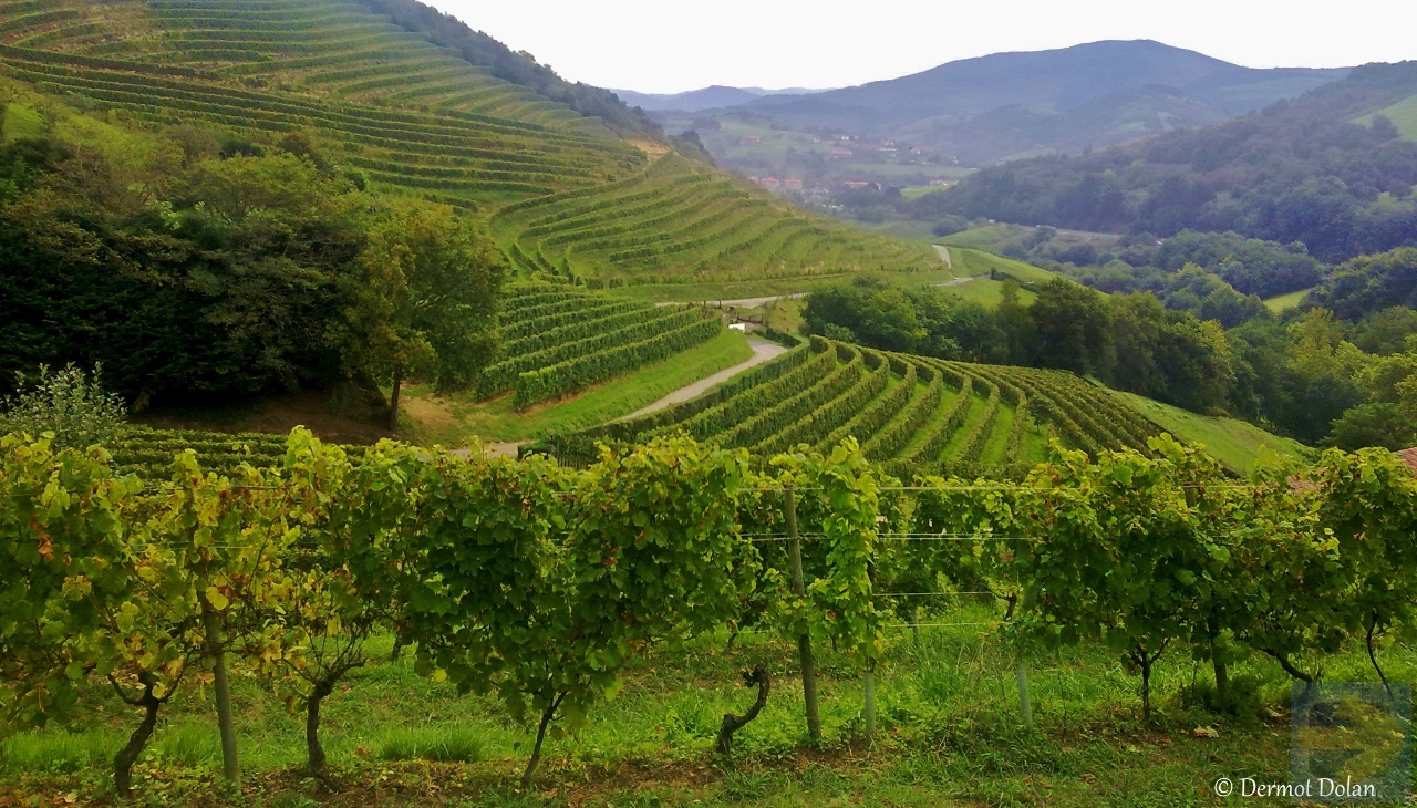 Vineyard near the start of the Camino del Norte.